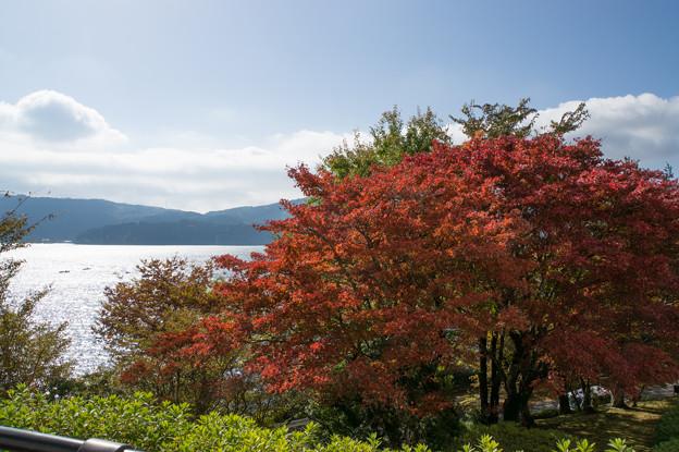 芦ノ湖の紅葉も進んでました(4)