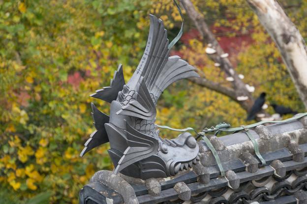 姫路城【29_間近に見る鯱】