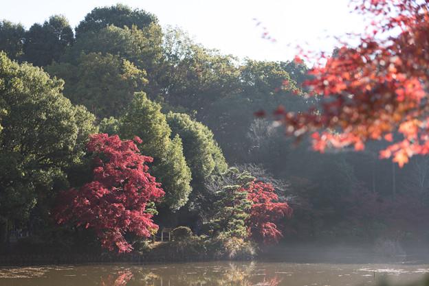 薬師池公園【遠くからの眺望】1