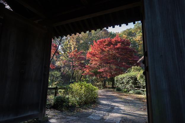 薬師池公園【薬医門近辺】2