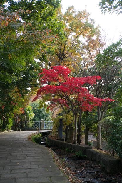 【ささぶねの道の紅葉】3_1