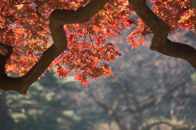 新宿御苑【日本庭園の紅葉】3