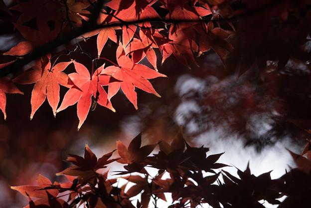新宿御苑【上の池の紅葉】5