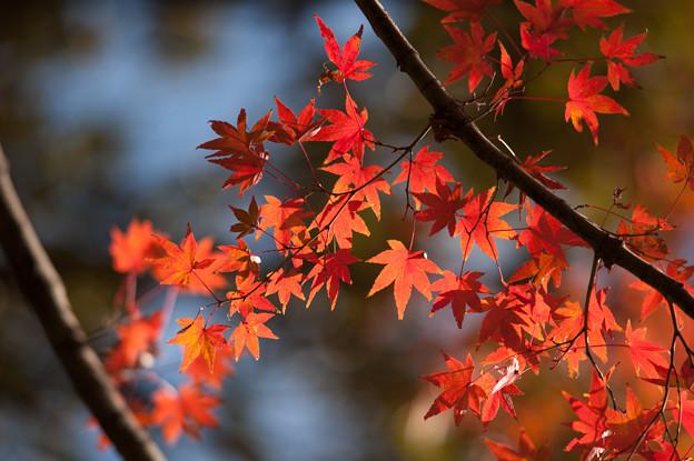 小石川後楽園【深山紅葉を楽しむ】1_5