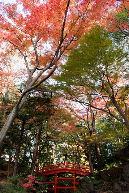 小石川後楽園【深山紅葉を楽しむ】2_4