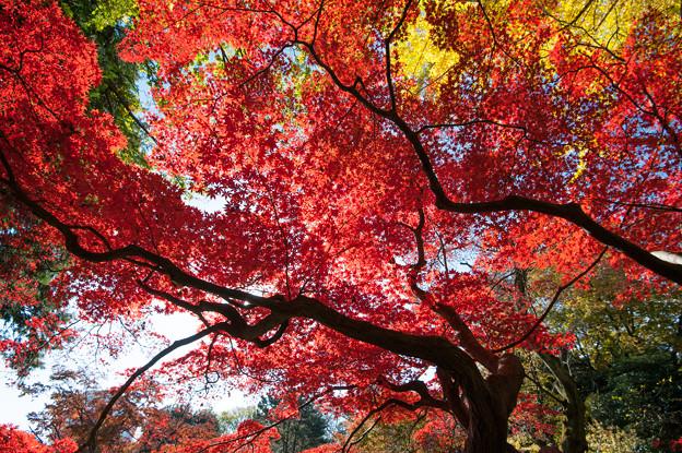 【六義園の紅葉】1_2