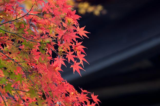 【九品仏浄真寺の紅葉】2_1