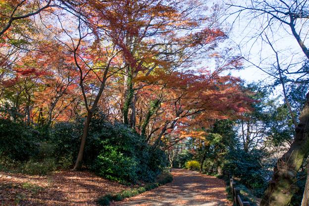 新宿御苑【モミジ山の紅葉】1_2