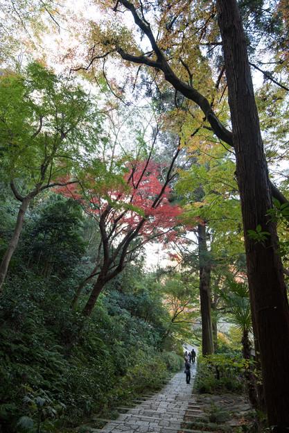 【鎌倉瑞泉寺の紅葉】6