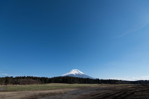 富士山【朝霧高原からの眺め】1