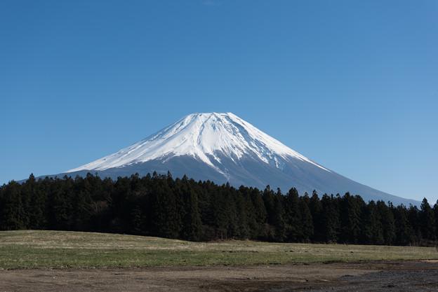 富士山【朝霧高原からの眺め】2