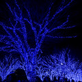 青の洞窟_SHIBUYA【代々木公園ケヤキ並木】2