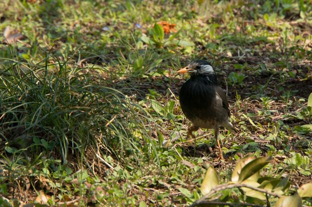 神代植物公園【鳥】