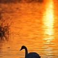 Photos: 琥珀鳥
