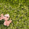 写真: 一株の花