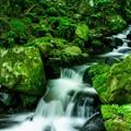 Photos: 緑の世界
