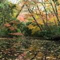 写真: 静寂に染まる秋