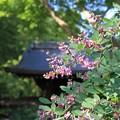 IMG_7388梨木神社・萩と神門