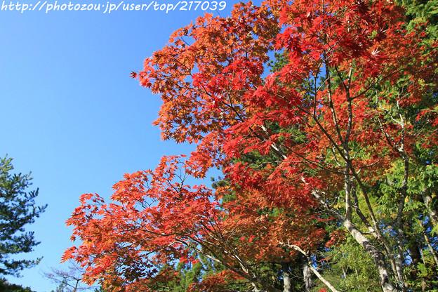 IMG_9676圓成寺・紅葉
