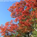 Photos: IMG_9676圓成寺・紅葉