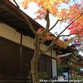 Photos: IMG_9713圓成寺・鎮守拝殿と楼門(重要文化財)と多宝塔