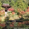 Photos: IMG_9727圓成寺・庭園