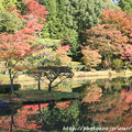 Photos: IMG_9730圓成寺・庭園