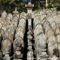 Photos: IMG_9739正暦寺・僧侶の墓石群