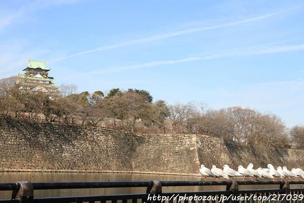 IMG_1848大阪城公園・東外堀・百合鴎と大阪城天守閣