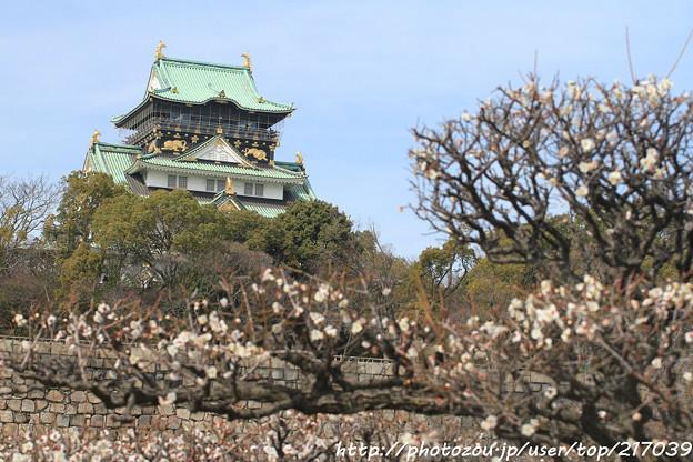 IMG_2045大阪城公園・梅林・大阪城天守閣と梅