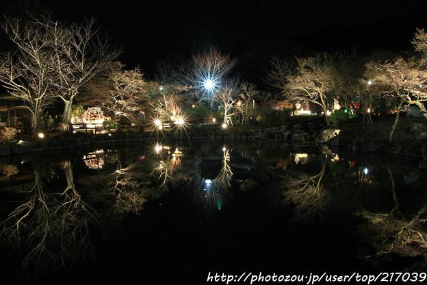 IMG_2445京都・東山花灯路2017・前期・円山公園