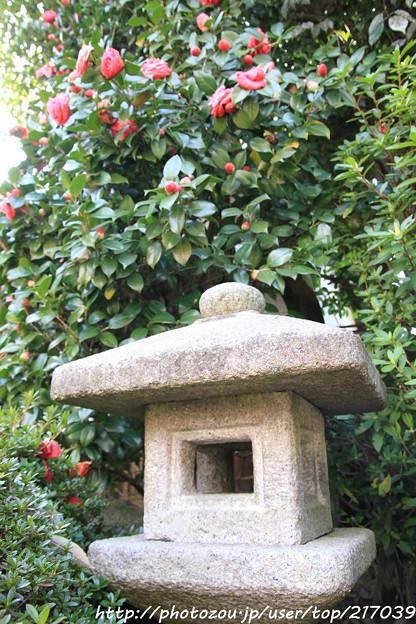 IMG_2693長建寺・灯籠と椿