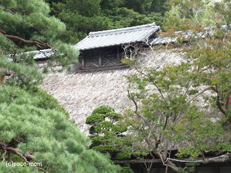 常楽寺 P8150102