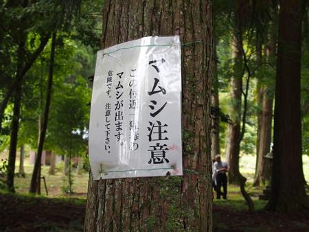 長浜 東林寺 P9250098