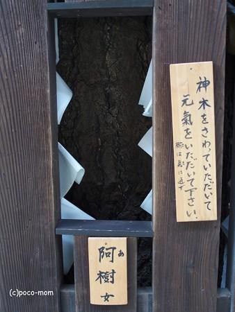 平等寺因幡堂 PB030288