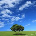 写真: 夏の青空