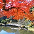 新宿御苑の秋景1