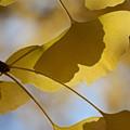写真: 木の葉の影2