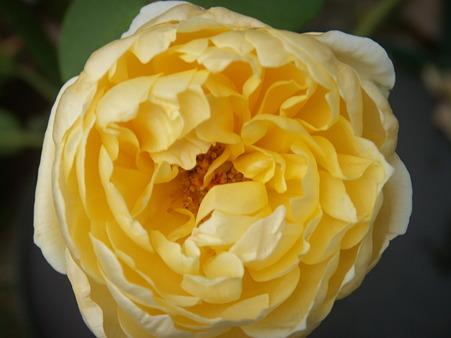 201011 010