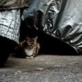 猫撮り散歩1698