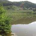 Photos: 柿果樹園隣接の池 (1)