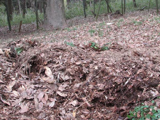 写真: 堆肥