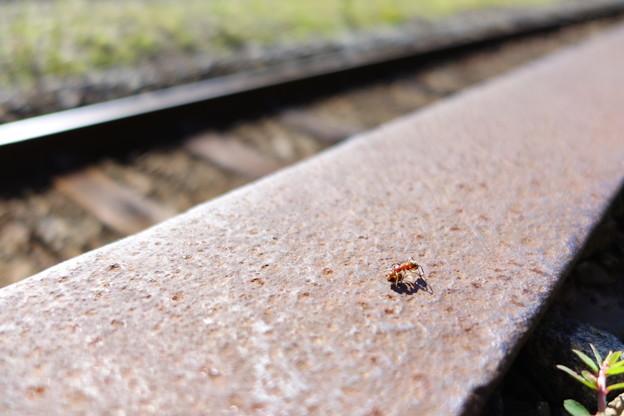 塩狩駅で働くアリ