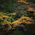 紅葉の花貫渓谷