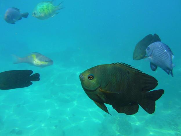 お魚たち@ブルーラグーンビーチ
