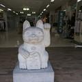 写真: 鎌倉小町通りに居た左手挙げの招き猫