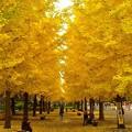 黄金の小道