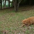 猫 VS ○○ 1