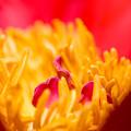 花の中心で・・・