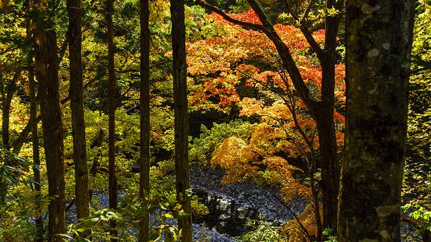 Photos: 中津川と紅葉
